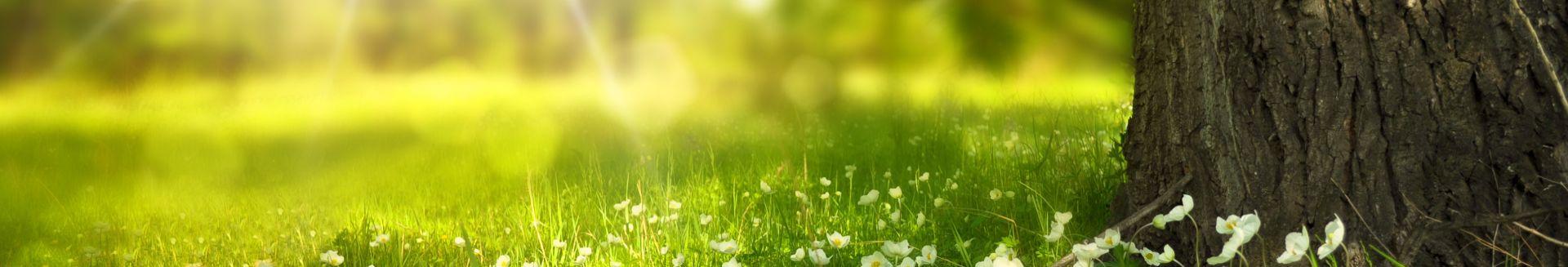 somer-tree-flowers-meadow-a